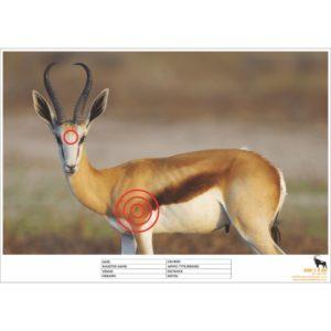 Springbok Shooting Target