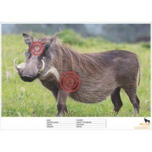 Warthog Shooting Target